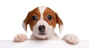 גור כלב חמודד